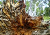 Petersen Company Photography Tahoe Stump